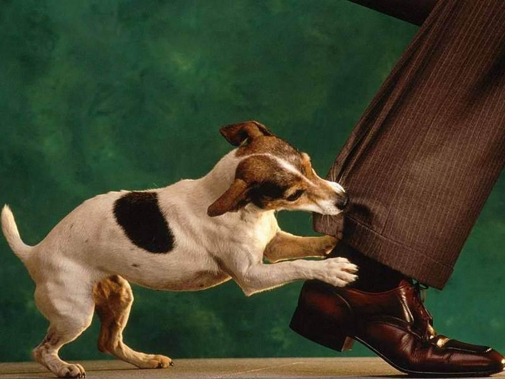 Milyen kommunikációs jelzéseket tanultak el tőlünk a kutyák?